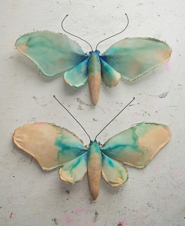 blue butterfly group - photo #4