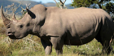 Rhinoceros - Animals That Start With R