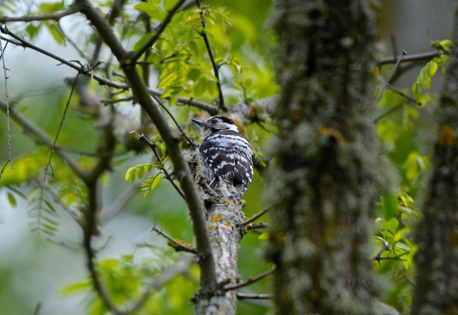 El nido de xuan