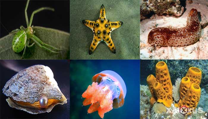 10 Contoh Hewan Avertebrata atau Invertebrata Beserta Ciri-Ciri dan Penjelasannya