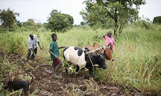 Agriculture Opportunities In Borno State Africa 2BFarmers2