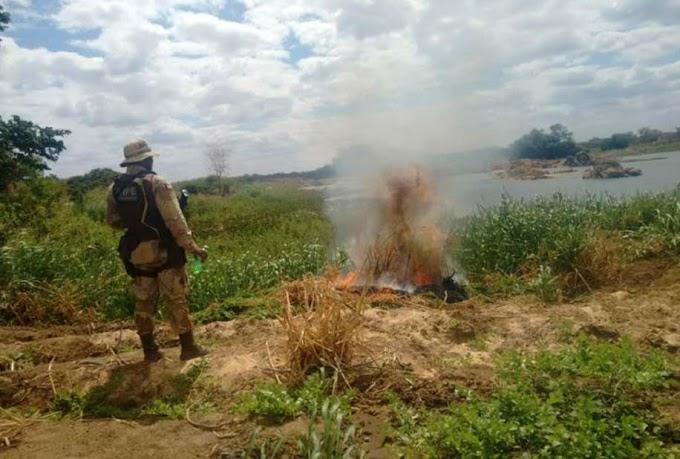 Operação apreende quase 12 toneladas de maconha no sertão da Bahia