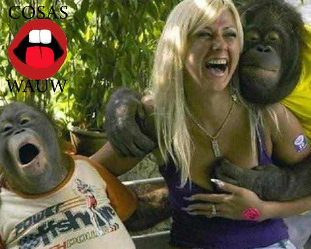 Chimpaces salidos con una chica rubia