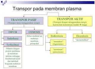 susunan Pengertian Transpor Zat Pada Sel