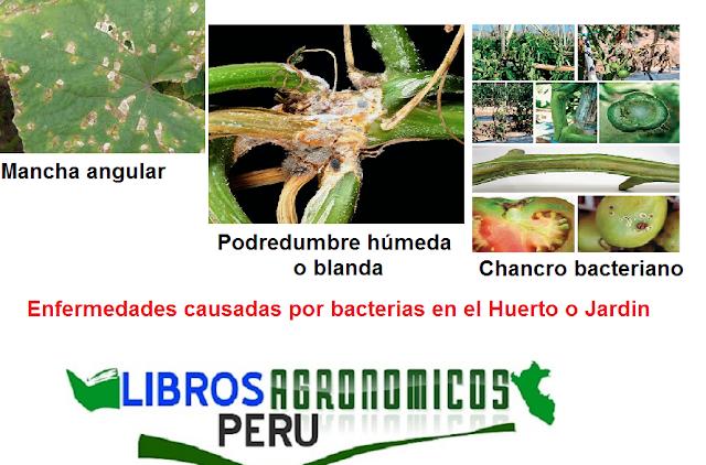 Huerto:Enfermedades causadas por bacterias en el Huerto o Jardin