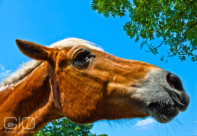 Photo: Curious Horse