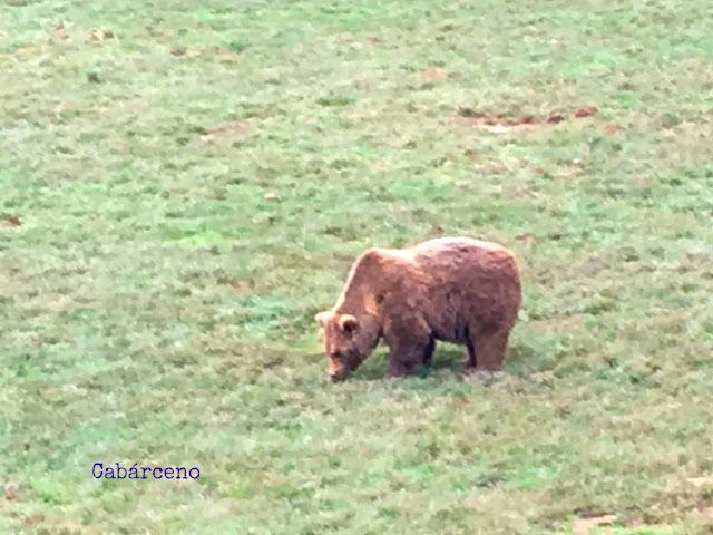 niños aprender osos libertad
