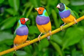 Daftar Harga Burung Terbaru 2015