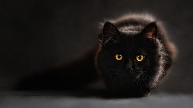 El Gato y sus Misterios