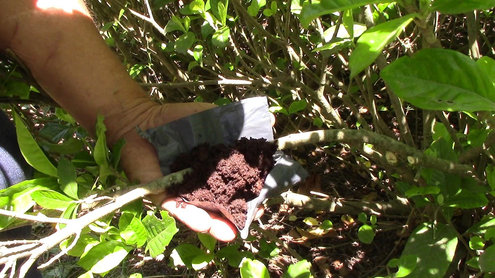 Como reproducir jazm n o gardenia por esqueje cosas del for Planta ornamental que se reproduzca por esquejes