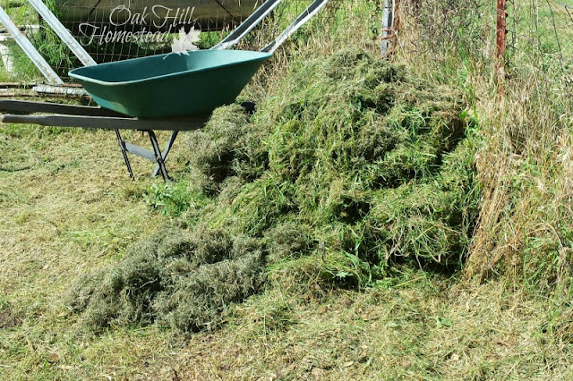 What do you do with your grass clippings after mowing the lawn? Compost them, of course!