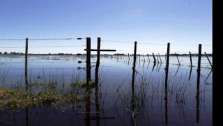 Emergencia agropecuaria: Villegas perderá el trigo por la inundación?