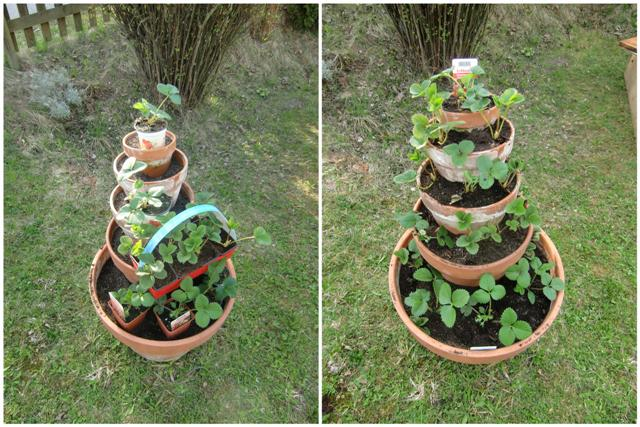 fertig bepflanzter Erdbeerturm - Gartenblog Topfgartenwelt