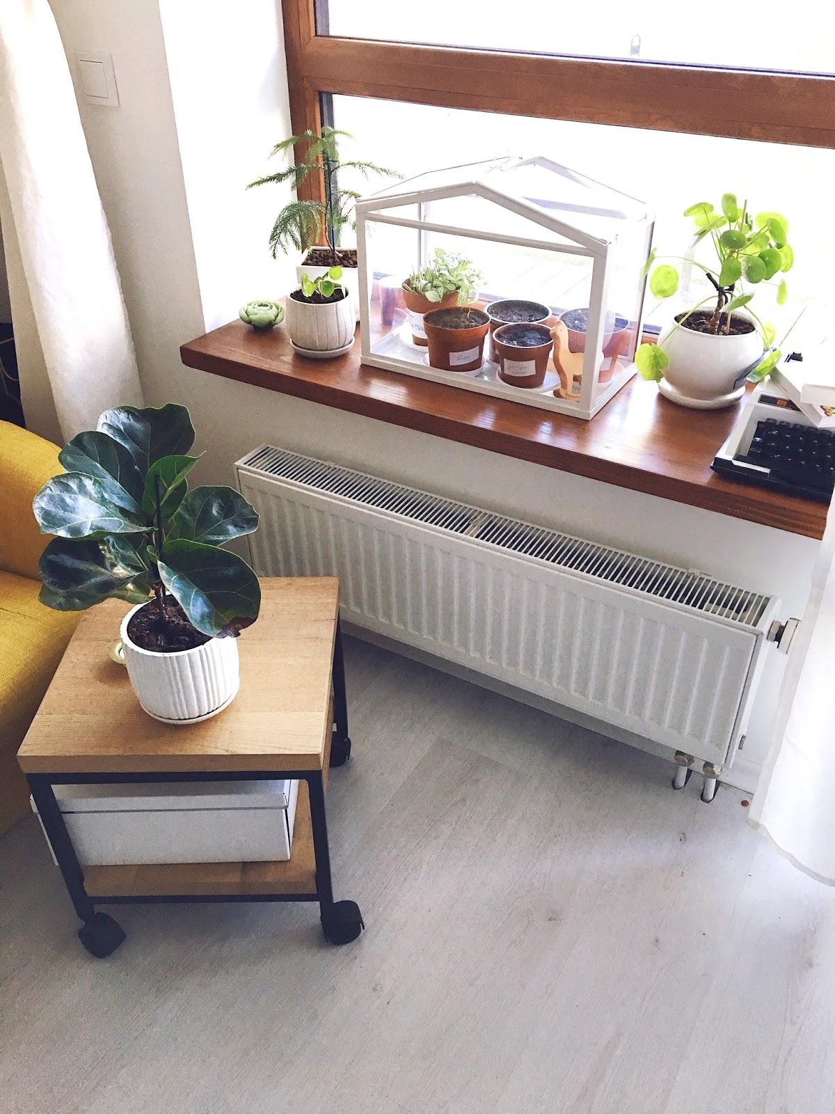namų augalai
