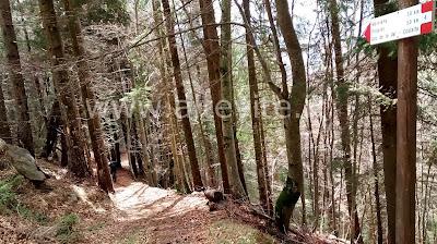 MTB Sant'Orsola Terme Valle dei Mocheni