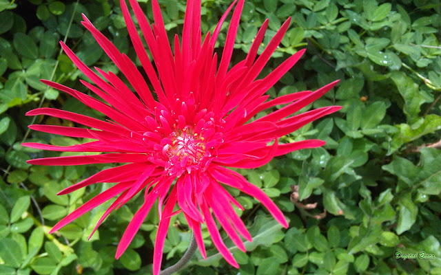 Bunga Merah Kuning Cantik Menarik | Flowers Wallpaper