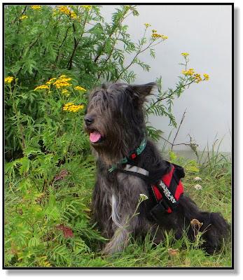 Lotte, Lottchen, mit Hund unterwegs, Hundeblog, Dogblog, zwei Hunde