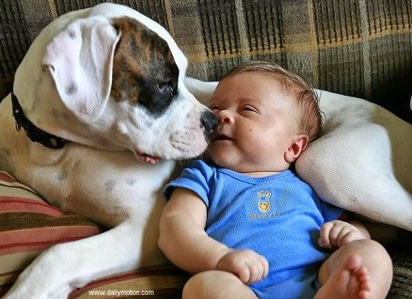 Image bébé avec son grand chien