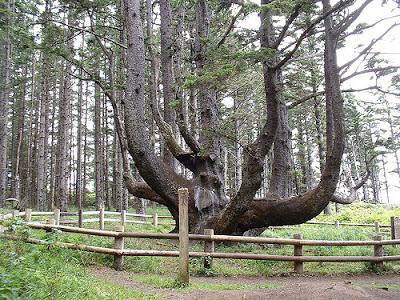 ශාක ලෝකයේ පුදුම හත,Wonders of the Tree World