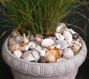 Seashell Garden Pot Mulch Idea