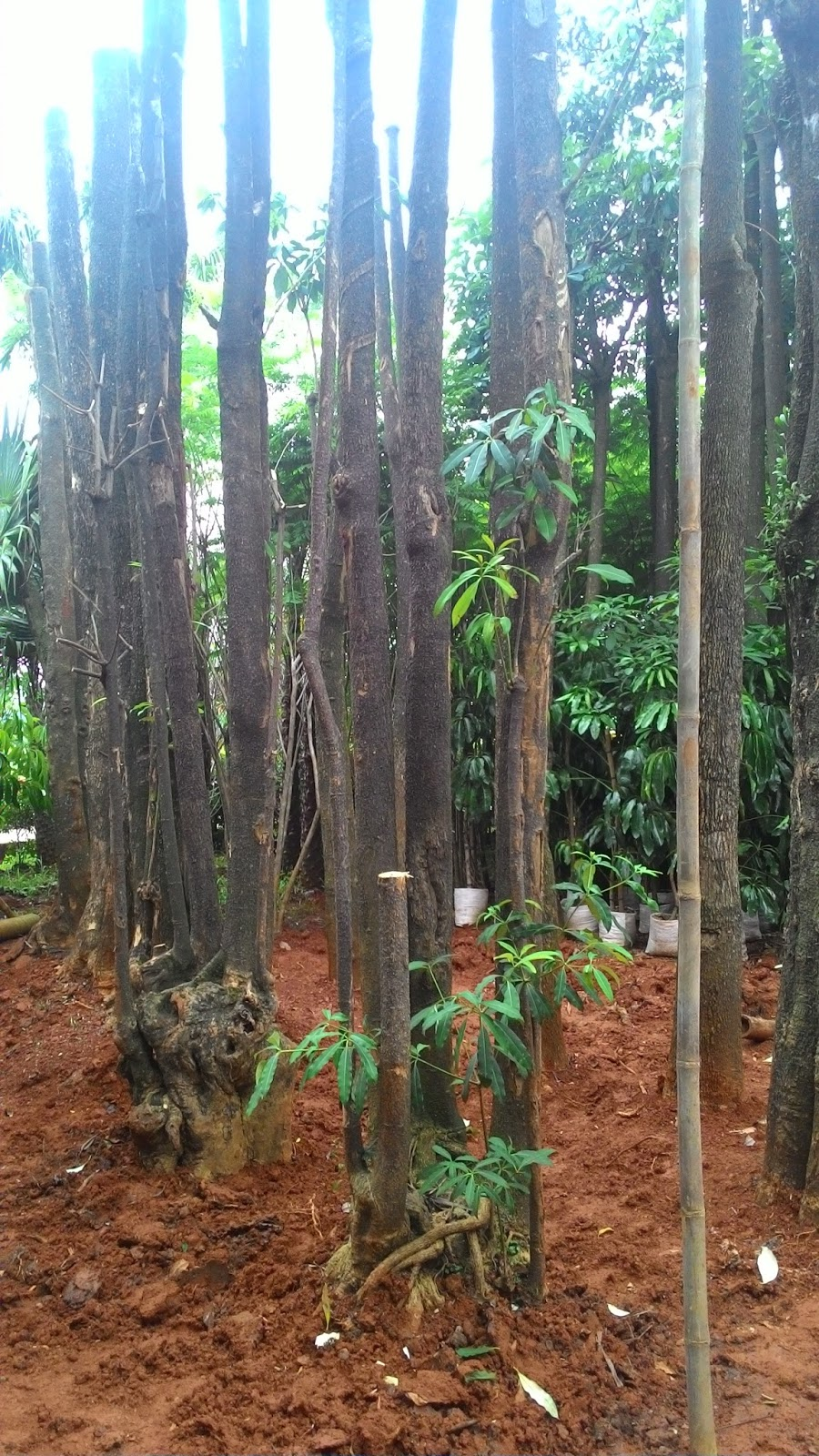 Tukang Taman Murah Tukang Taman Tanaman Hias Tanaman