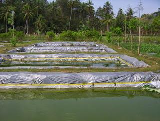 Gambar Ikan Air Tawar  Dunia Binatang