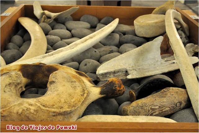 Huesos de Ballena en el museo de las ballenas de Husavik, Islandia