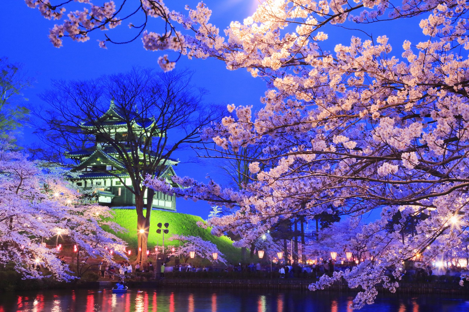 when to see cherry blossom in Japan