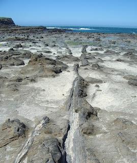 Curio Bay Nueva Zelanda