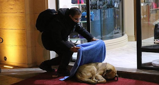 Οδοντίατρος σκεπάζει κάθε βράδυ αδέσποτες γάτες και σκύλους για να μην κρυώνουν!