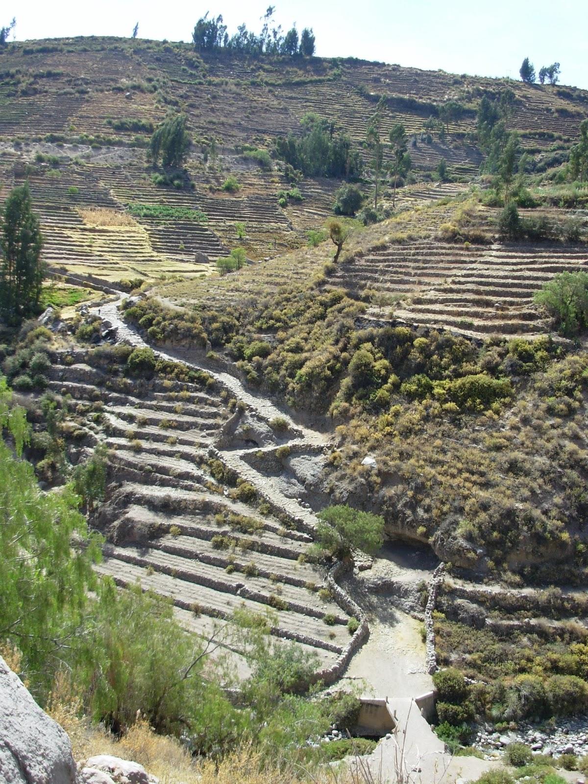 violetas: CAMINO DEL INCA