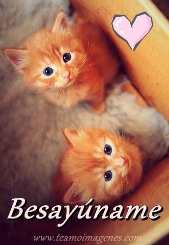 imagen de gatito diciendo besayuname