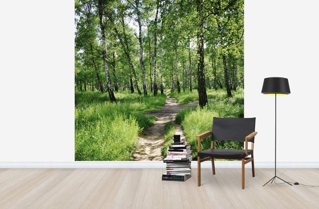 Koivu Tapetti Koivutapetti Koivumetsä Valokuvatapetit Metsä Birch Forest aurinkoisena päivänä