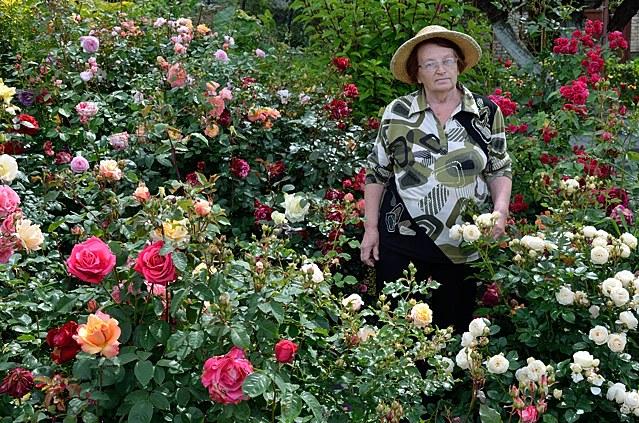 Купить саженцы роз в Минске! Питомник в Беларуси продажа каталог заказ сортов роз.