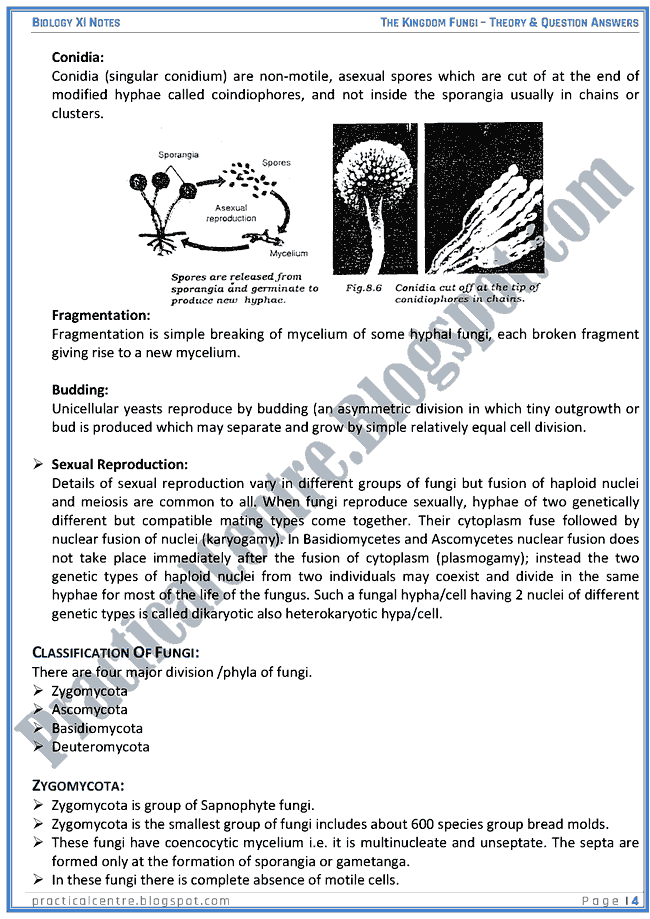 the kingdom of fungi essay Ameoba phylum rhizopoda move by rearranging the cell membrane (liquid fluid mosaic model) and cytoplasm to create pseudopods ameoba we will write a custom essay sample on kingdom fungi and protozoa or any similar topic only for you order now moveable extensions of cytoplasm pseudopods ciliates phylum ciliophora have many small hairs called cilia whose [.