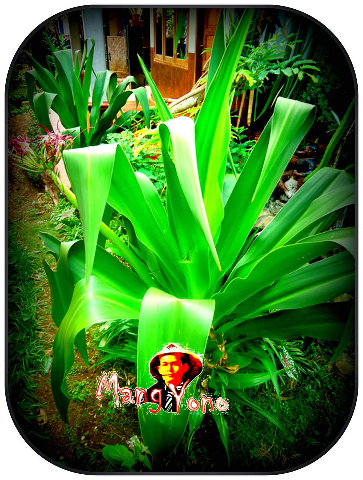 Download 81 Gambar Kata Bunga Bakung HD Paling Keren