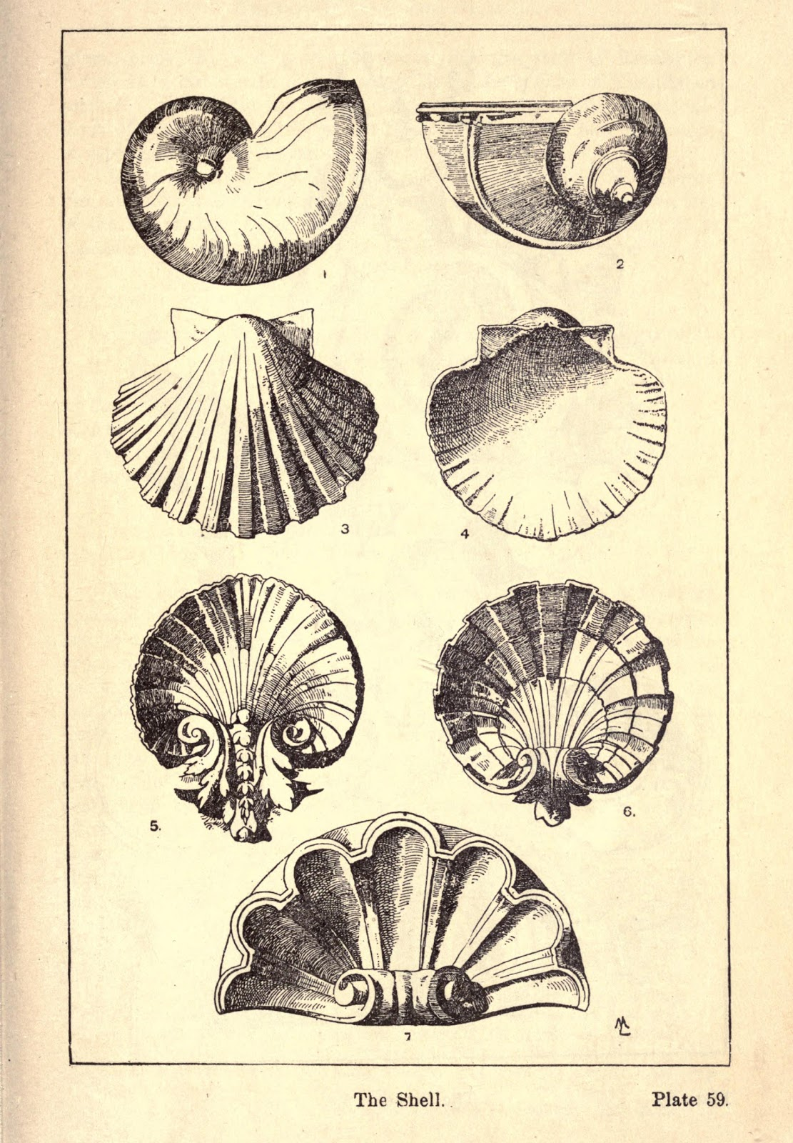 Vintage Ephemera Engraving Decorative Seashells 1920
