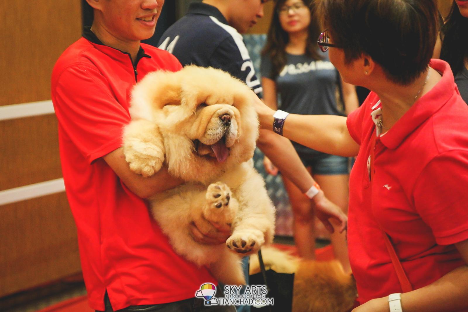 Super fluffy Chow Chow