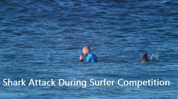 How Shark Attack During Surfer Competition [Video]