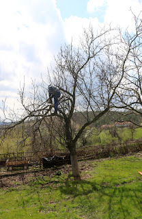 Bekir with chainsaw up the tree