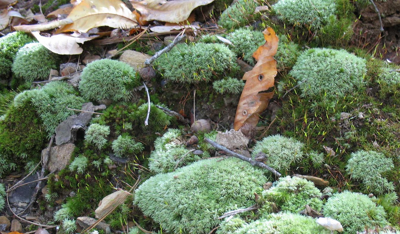 Using Georgia Native Plants Marvelous Moss