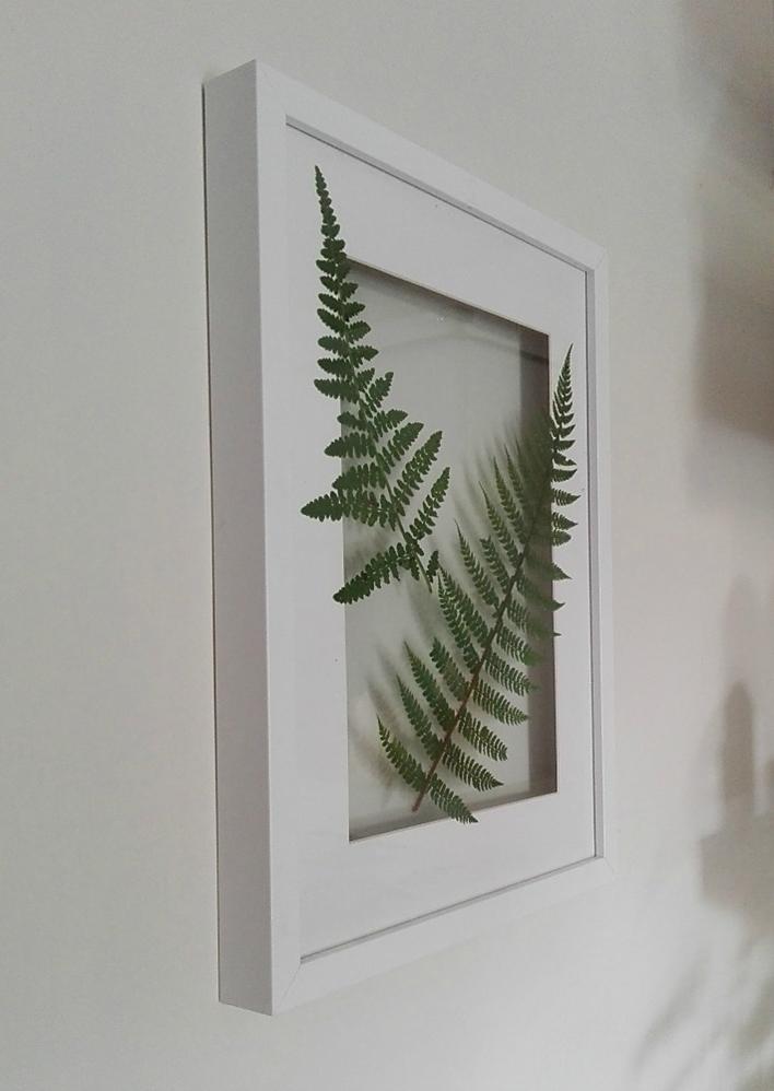 Decoración Fácil: Cuadro de botánica handmade con helechos naturales