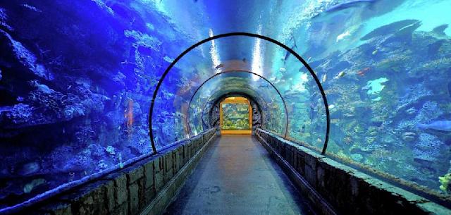 Shark Reef Aquarium em Las Vegas