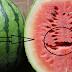 خطر الشقوق الموجودة في فاكهة البطيخ