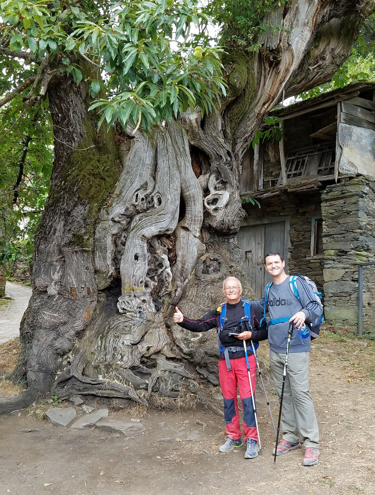 Standing in front of a 900-year-old Cypress, my friends Julian from Seville whom I would meet up with three more times before the end of my Camino, and his friend Ramo from Italy.