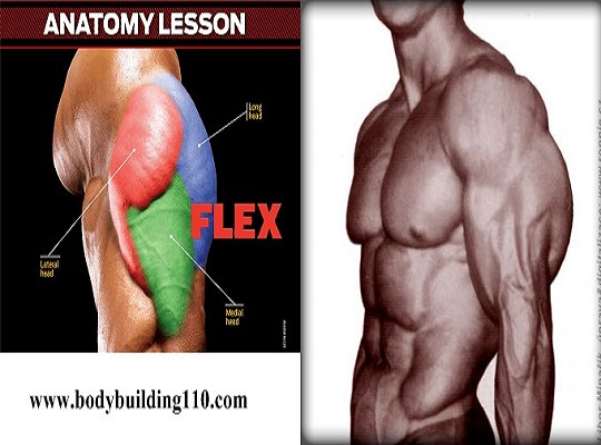 Strategies for Building Bigger Triceps & Triceps Training Tips