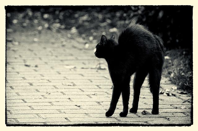 photo-chat-noir-vendredi-13