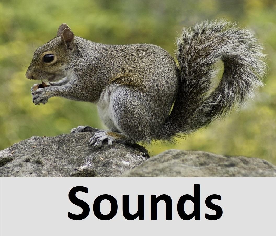 All Sound Effects: animals sound effects