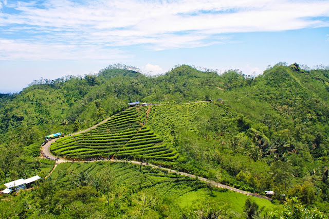 Kebun teh Nglinggo, Kulon Progo.