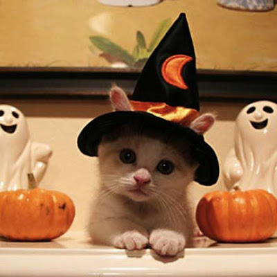 Halloween-pictures-of-caty-cute-pose